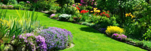 cultiver sa pelouse